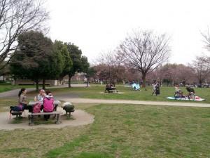 2016/03/30桜は三分咲きでしたが、舎人公園でお花見ランチ