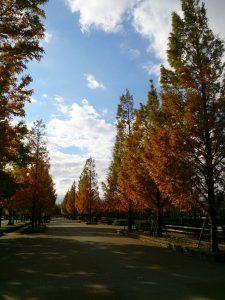 舎人公園陸上競技場への並木も紅葉