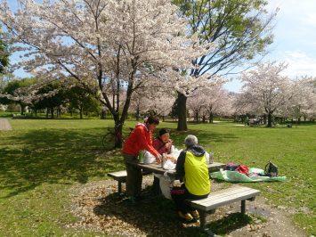 2017/04/12のランチも舎人公園でお花見1