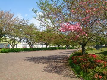 2017/04/19の舎人公園陸上競技場