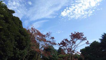 2017/11/01 代々木公園は青空だった