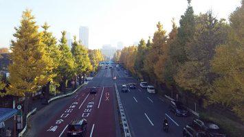 2017/11/29の神宮外苑信濃町の歩道橋からイチョウ並木を見る