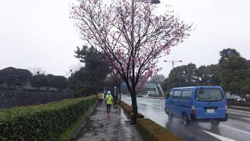 2018/03/21の颯走塾水曜マラソン練習会in皇居2