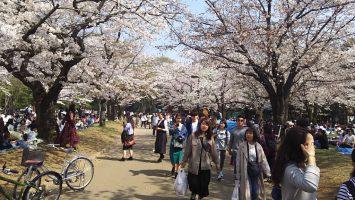 2018/03/28代々木公園にて花見1