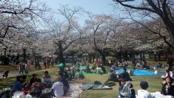 2019/03/27のランチは代々木公園でお花見1