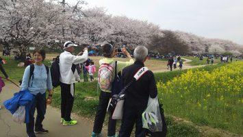 2019/04/07幸手桜まつりにて1
