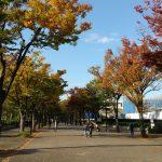 2019/11/13の代々木NHK前の並木は程よく紅葉