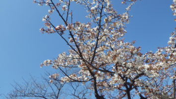 2020/03/18の颯走塾水曜マラソン練習会in織田フィールド7